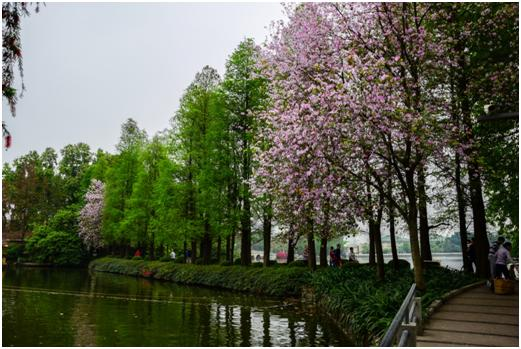 広州東山湖公園(写真提供:広州住友商事有限公司 葉 海珠)